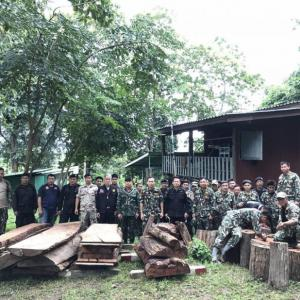 Illegal Logs Seized