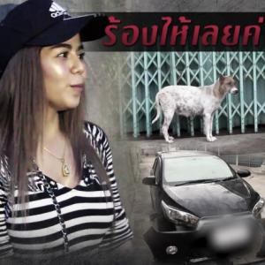 Now stray Thai dogs attack a car - woman owner left in tears aftermongrels rip her car apart!