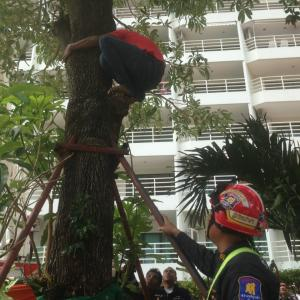 Tree drama descends into farce as rescuer falls onto airbag andCambodian sent home