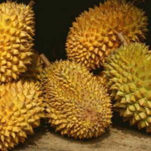 Phuket durian to be upgraded as GI product