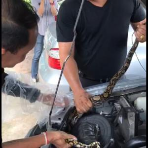 Python was all in a day's work for Pattaya policeman!