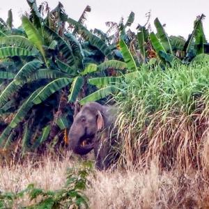Farmers' joy: elephant damage now covered