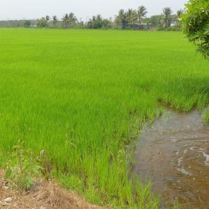 No drought this year, says irrigation dept