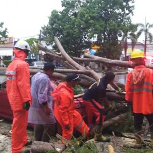 Trees damage cars and a house in Phuket