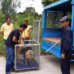 Pattaya lets stray dogs remain on street after shots