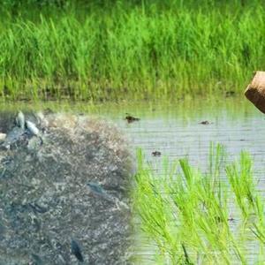Chiang Mai tells farmers to delay planting rice, raising fish