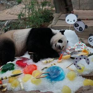 Chiang Mai's giant panda, Chuang Chuang, dies at 19