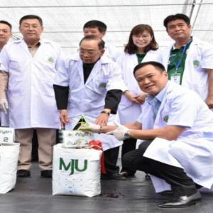 Chiang Mai university becomes first Asean nation to grow own breed of cannabis