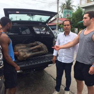 Foreigners who stole wooden elephant caught on Koh Phangan