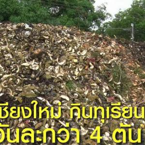 Durian consumption in Chiang Mai a whopping 4 tons a day!