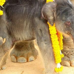 Suan Nong Nuch celebrates birth of eight baby elephants in six months