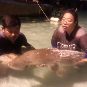 Protection areas to be set up following death of dugong in Phuket