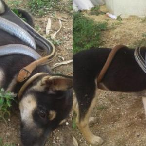Unlikely friendship? Photos of 'puppy bringing home serpent friend' go viral