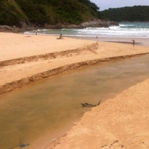 Phuket boy rescued from lagoon remains unconscious