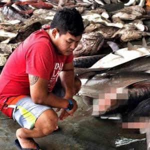 Sharks being fished out of existence in Thai waters
