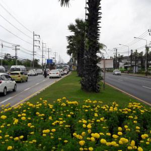 Stop stealing the marigolds, urges Phuket official