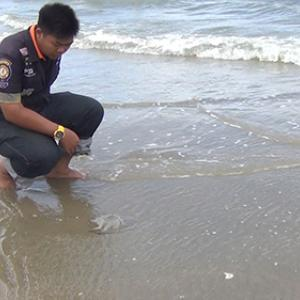 Warning issued after foreign tourists stung by dangerous jellyfish on Pranburi beach