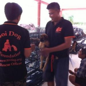Soi Dog Foundation expands canine sterilisation, vaccination programme