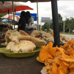 Bewildering Wild Mushrooms are Available in the Markets