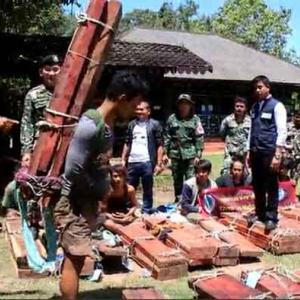 Nine more Cambodian illegal loggers arrested in Thap Lan National Park